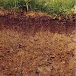 Soil Wetness Index